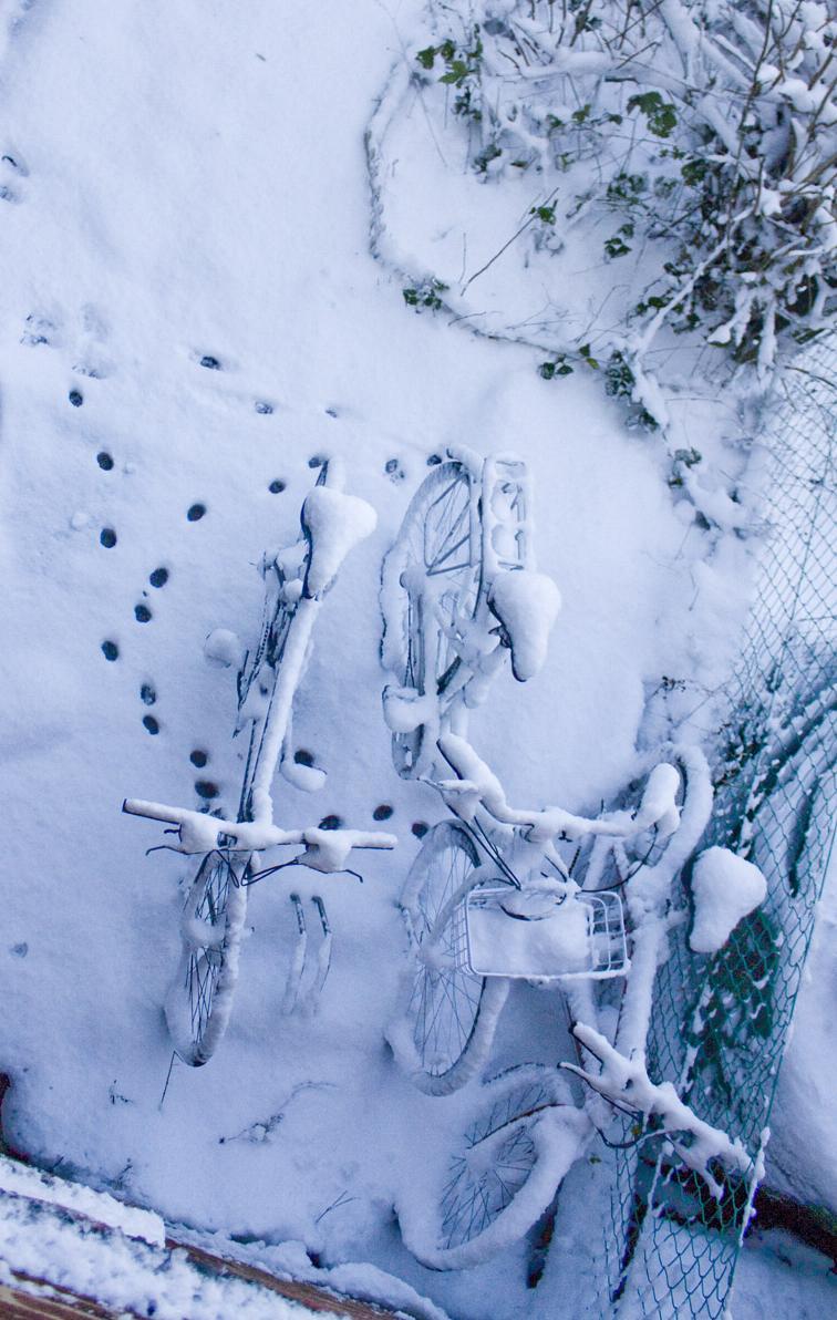Snow bikes s