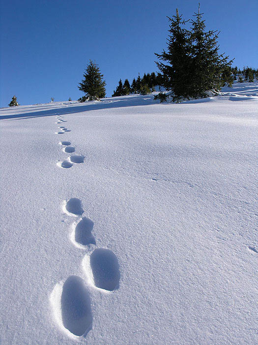 road_winter