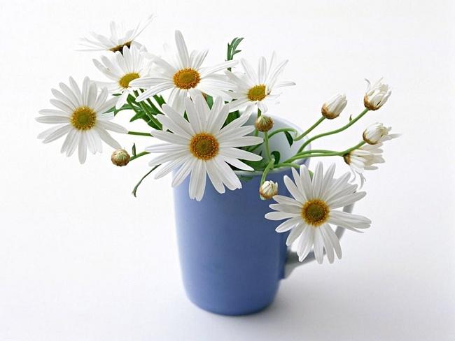 snow_daisies2