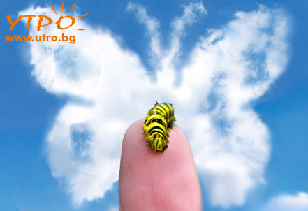 пеперуда в облаци