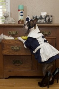 draft_lens1545704module56617622photo_1252787023dog_french_maid_costume