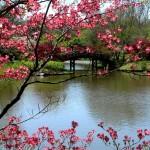 Пролет по света