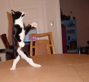 cat2589