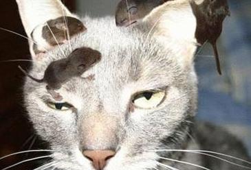 cat3366