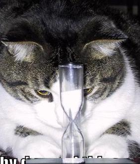 cat4774