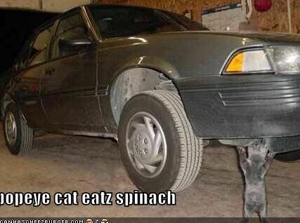cat554