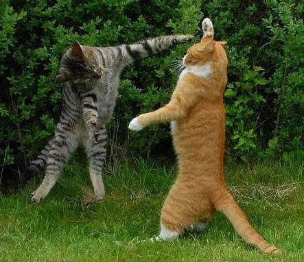 cat55544