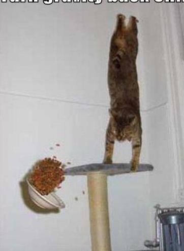cat5555