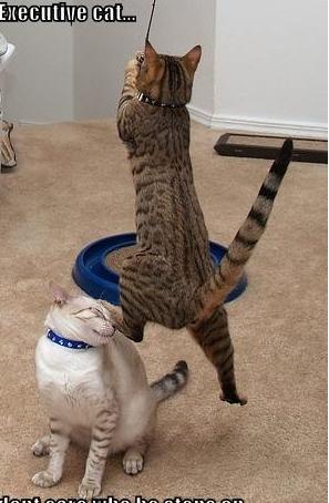 cat6655