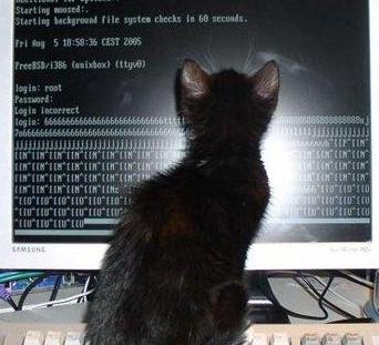 cat6969