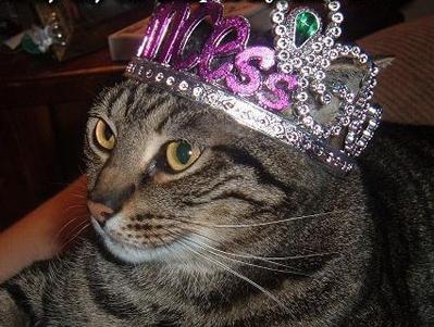 cat987