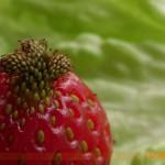 Кралицата на плодовете