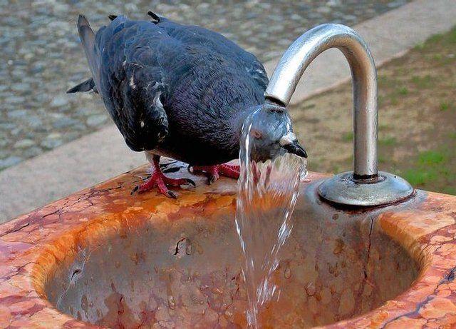 animals_bird