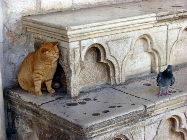 cats_and_cats_23