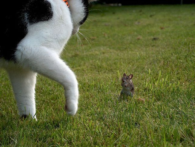 cats_and_cats_29