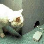 Котката на програмиста