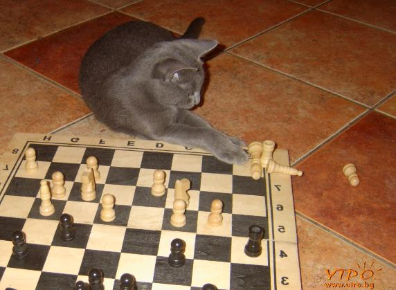 chess_cat котка шах