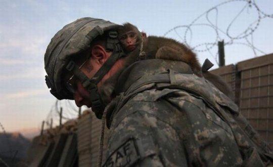 военен и внимателен