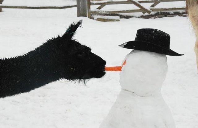 снежен човек зима морков нос коза