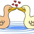влюбени патета валентинка романтика животни