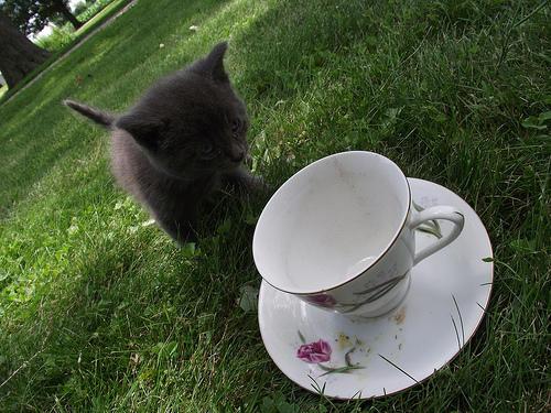 сладичко котенце