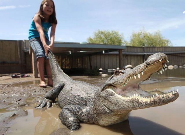момиче победи крокодил