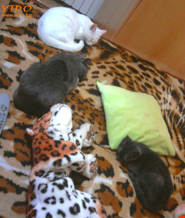 cat-fun