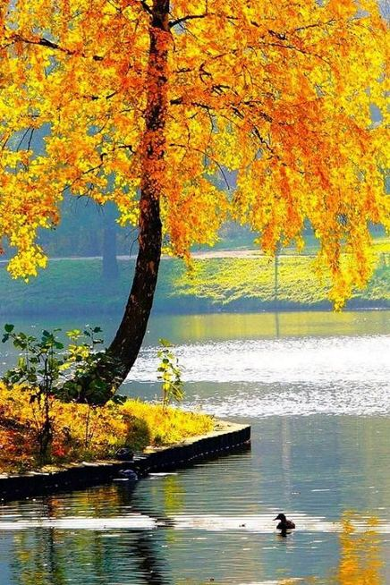 есенни картинки за телефона