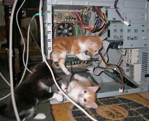 котенца в компютъра