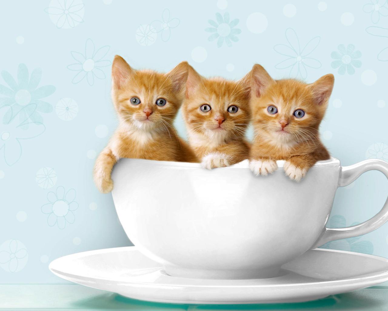 Котешки мъдрости