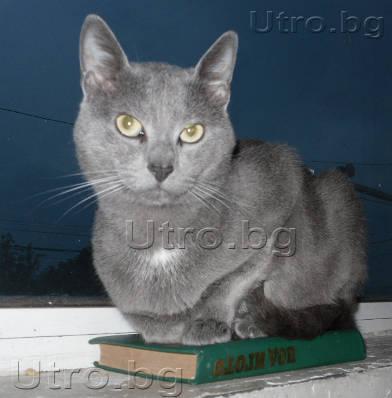 Котка чете книга