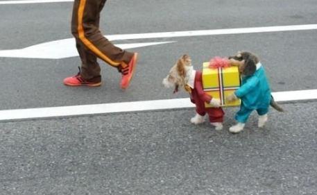 карнавални дрехи за кучета