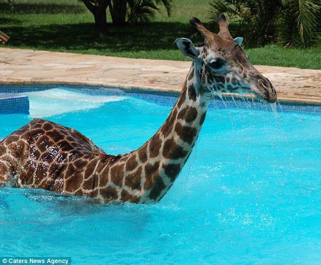 чудовището от Лохнес жираф