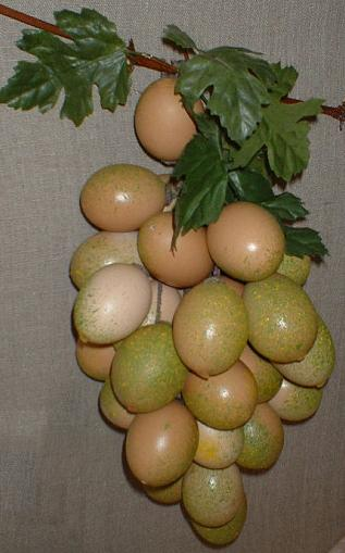 грозд яйца