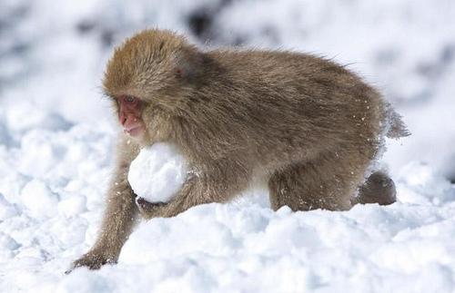 SnowMonkey33
