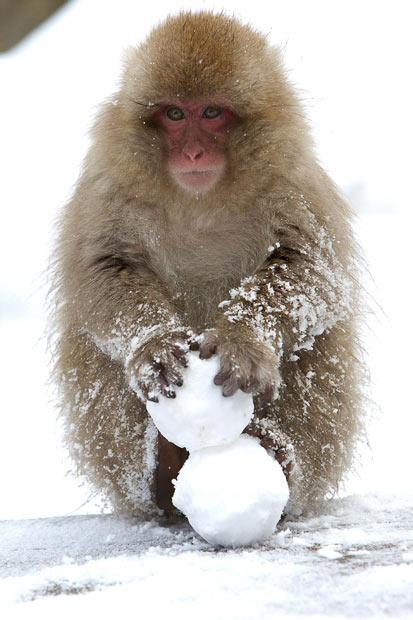 SnowMonkey63