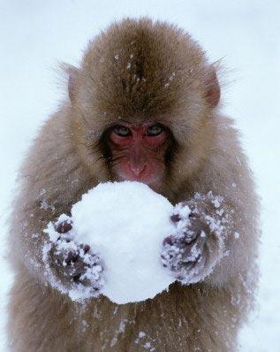 SnowMonkey83