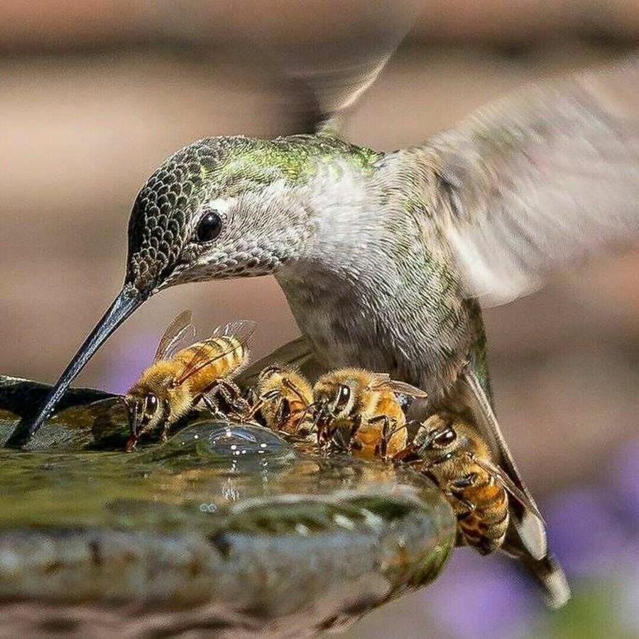 колибри и пчели