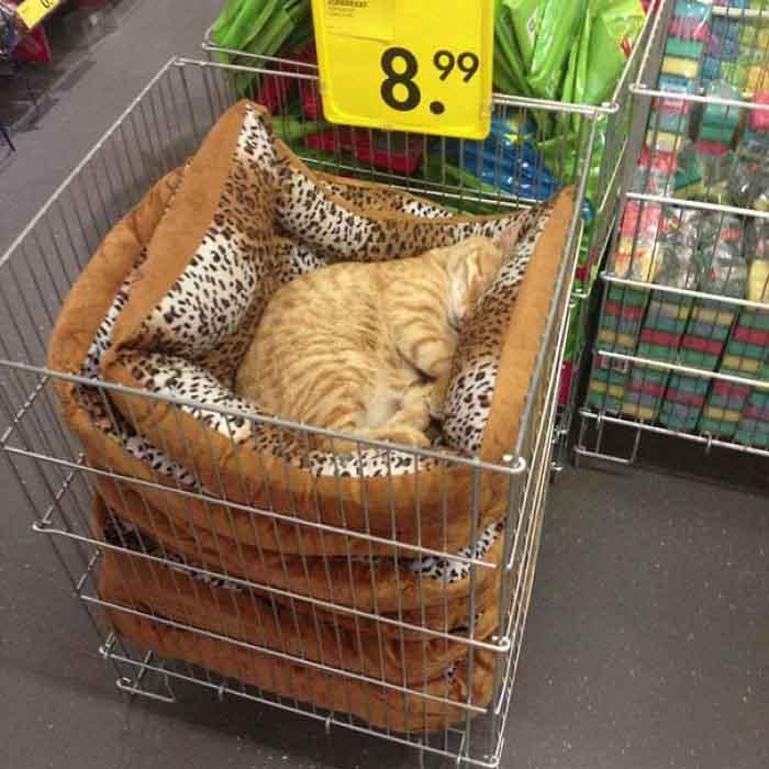котка спи