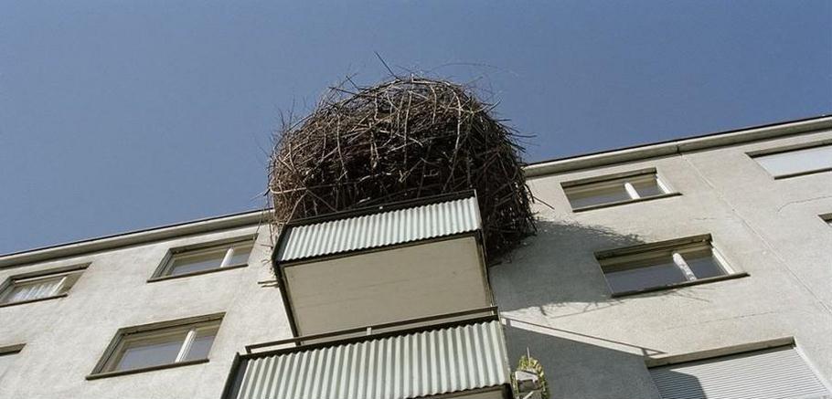 гнездо на балкона