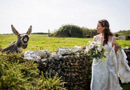 сватбени фотографии