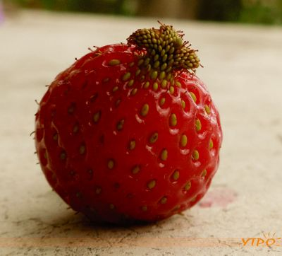 Игра ягода фото 5