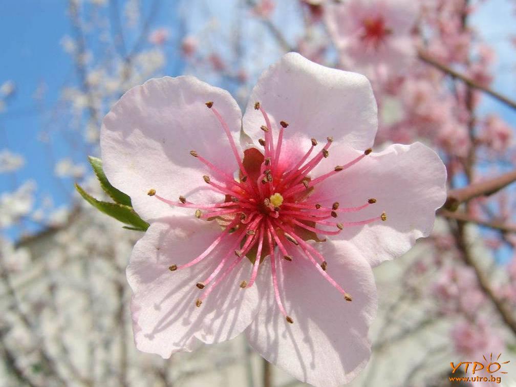 пролетен десктоп