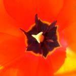 V Майски фестивал на цветята – Варна