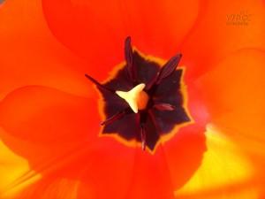 V Майски фестивал на цветята