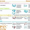 физиология през различните фази на съня