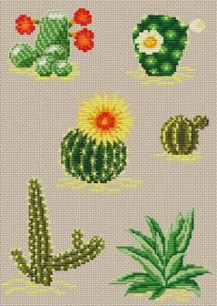 Cactus_flowers_plants