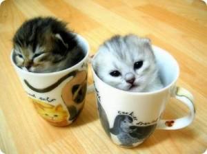 Гледането на клипчета с котки е доказан начин за справяне със стреса