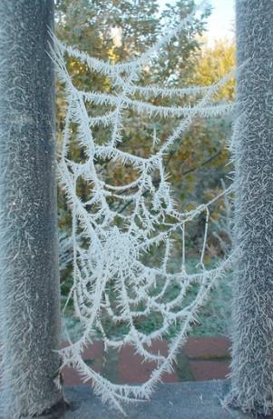 снежна паяжина