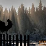 Утро в снежни клони